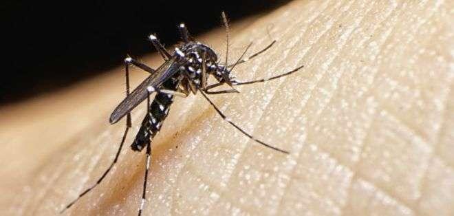 El zika es transmitido por la picadura de un mosquito.