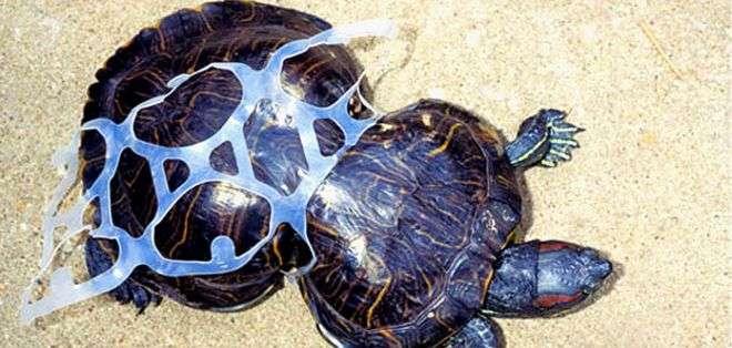 El plástico actuó como corsé y su cuerpo se adaptó a él.
