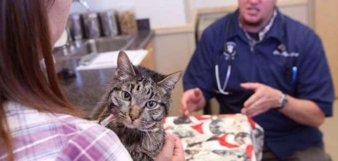 EE.UU.- Kymberly y Jesse Chelf, los dueños de Moosie, pensaron que habían perdido su mascota en El Paso.  Foto: Web America TV.