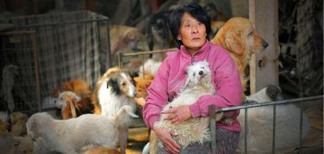 Una mujer china pagó más de 1.100 dólares para salvar a 100 perros de ser masacrados y comidos. Foto: Web.