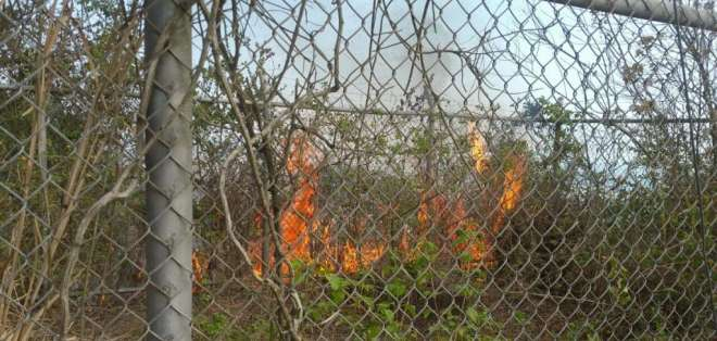 Más de 20 unidades del Cuerpo de Bomberos acudieron al sitio para controlar el fuego. Foto: @BomberosGYE