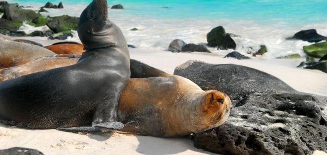 Los expertos visitaron 28 sitios en 14 islas del archipiélago. Foto: Internet