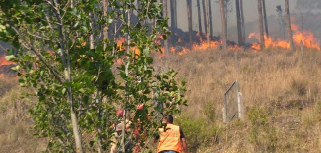 4 provincias son las más afectadas; bomberos sofocaron llamas en una decena de bosques. Foto: Secretaría de Gestión de Riesgos