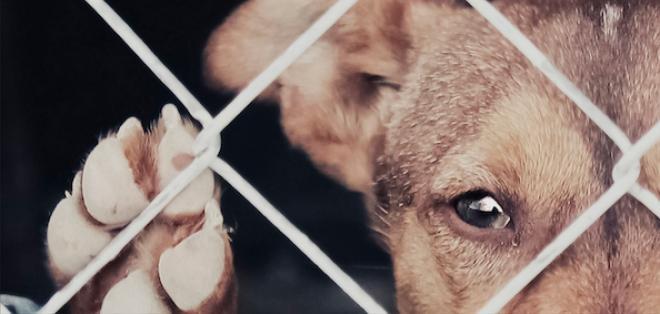 La mujer deberá pagar una multa de $20.918 por delito de maltrato animal. Foto: referencial