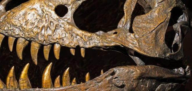 En el nuevo orden genealógico, el Tyrannosaurus rex cambia su clasificación.