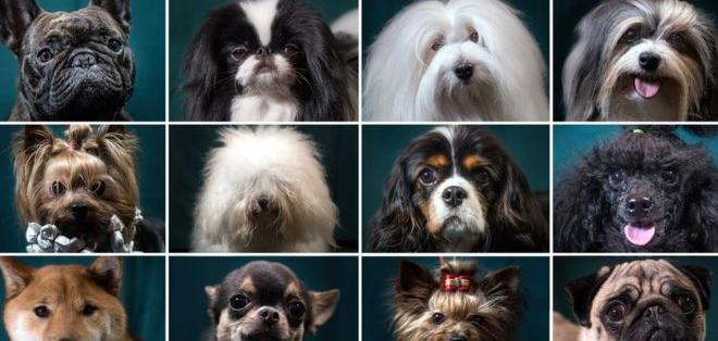 Peludos, pelados, blancos, negros, lisos o manchados... los hay para todos los gustos.