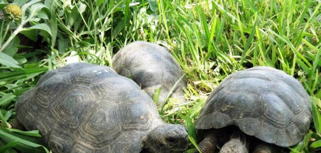PERÚ.- El hallazgo se produjo durante un trabajo de identificación de una presunta mafia internacional de tráfico de fauna silvestre. Foto: AFP