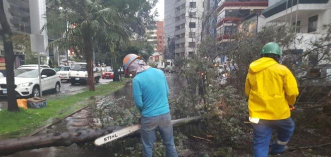 QUITO, Ecuador.- La lluvia de anoche no dejó víctimas, pero sí daños materiales, entre ellos el colapso de una alcantarilla, árboles caídos y calles inundadas. Foto: COE Quito