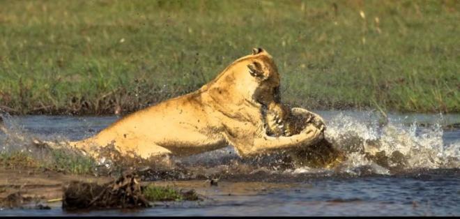 En un río de Botswana se vivieron minutos de dramatismo. Foto: referencial