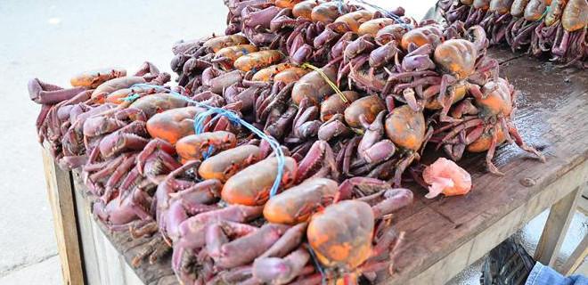 El viernes 15 de septiembre culminó la segunda veda anual de cangrejo. Foto: Archivo/API.