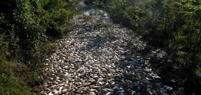 El hedor causado por la descomposición de los restos de peces satura el ambiente.
