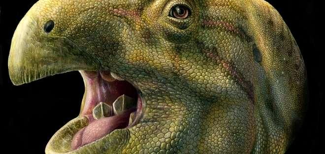 Los restos hallados muestran que el Matheronodon tenía los dientes grandes y afilados. Foto: El mundo.