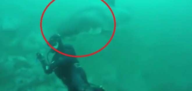 Un tiburón blanco casi le arranca la cabeza a un buceador. Foto: captura de video
