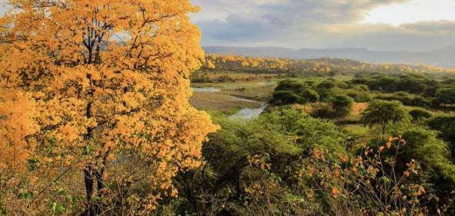 El evento natural dura entre cinco a ocho días en varias zonas rurales del país. Foto: Twitter Viaja Primero Ecuador.