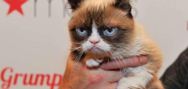 La gata se volvió popular por el gesto distintivo con el que nació.