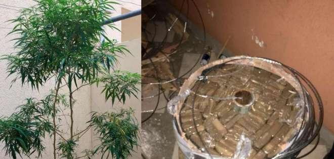 En inmueble allanado de Samborondón se encontró plantas de marihuana.