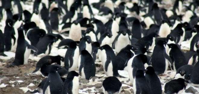Un censo había contado entre 285.000 y 305.000 nidos en 1996/1997. Foto: AFP.