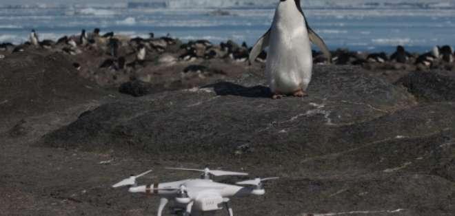 La población de pingüinos adelaida está en aumento globalmente desde hace 30 años. Foto: AFP.