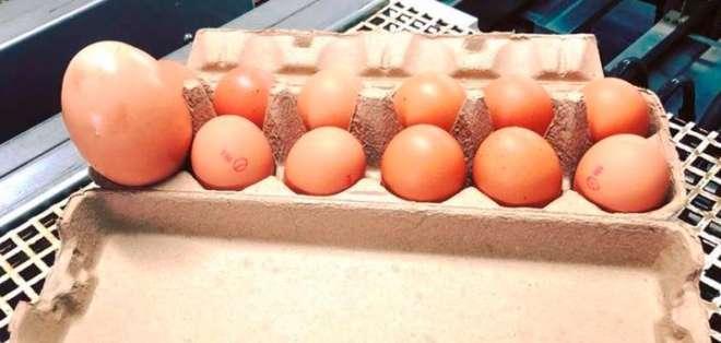 El curioso hallazgo ocurrió en una granja avícola de Australia. Foto: Captura