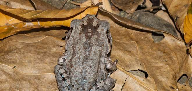 El hallazgo ocurrió en un bosque de Connecticut, Estados Unidos. Foto referencial / commons.wikimedia.org / Rushenb / CC BY-SA 4