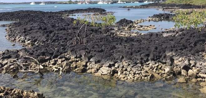 Unas 22 toneladas de residuos han sido retiradas de Galápagos entre enero y marzo. Foto: Parque Nacional Galápagos-Referencial