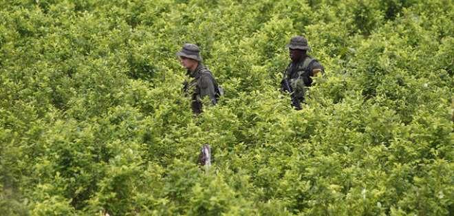 Colombia reanudará aspersiones con drones tras incremento récord de narcocultivos. Foto: AP