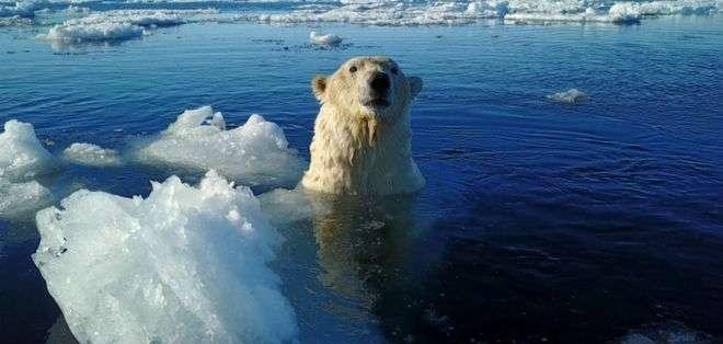 Image caption Un promedio de 3.000 osos polares disfrutan del clima helado en Svalbard.
