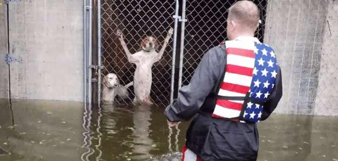 Los dueños los habrían dejado cuando comenzó la crecida de las aguas. Foto: captura de video