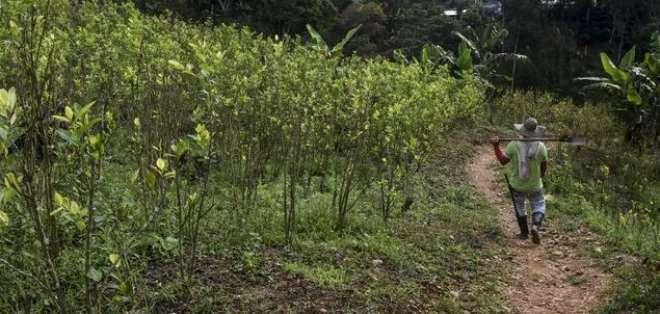 Colombia se mantiene como el mayor productor de cocaína del mundo. Foto: AFP