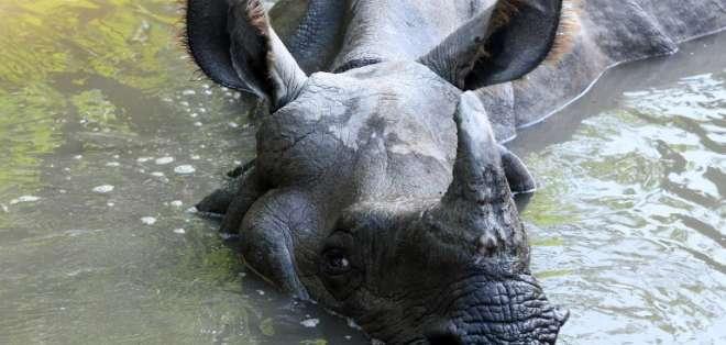 Activistas están preocupados por el peligro de extinción Foto: AFP