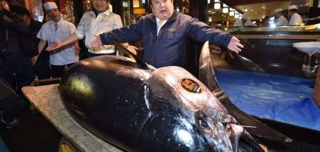 Un atún de 278 kg que costó US$3 millones.