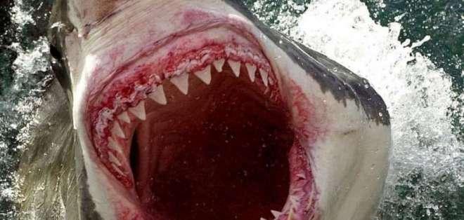 Joven fue embestido por un tiburón blanco de casi cinco metros. Foto referencial / AFP
