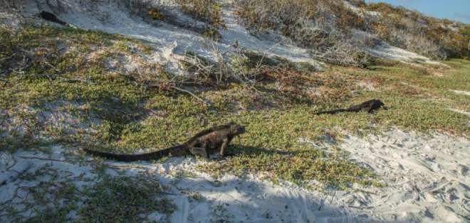 Casi 1.600 especies han sido introducidas en Galápagos. Foto: AFP - REFERENCIAL