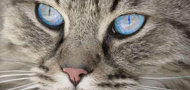La dueña de la mascota creía consideraba que su felino era feo. Foto referencial / pixabay.com
