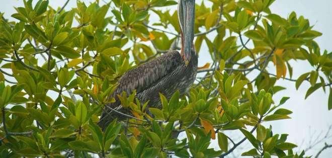 Un hombre atropelló y mató al ave en el muelle de carga de la isla Santa Cruz. Foto: Ministerio Ambiente