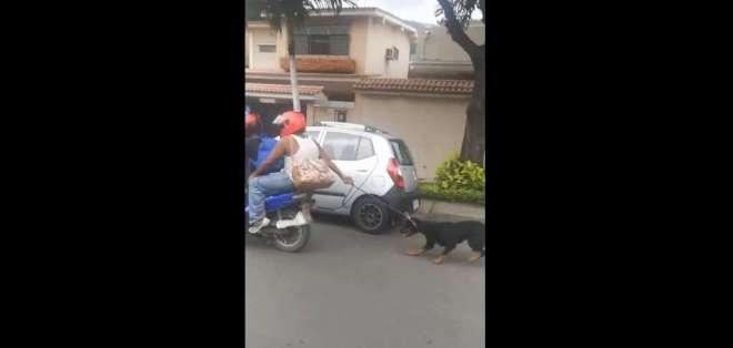 Caso de maltrato animal ocurrió en el norte de Guayaquil, según video difundido en redes. Foto: Captura