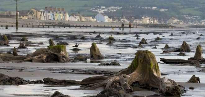 Los árboles quedaron sepultados bajo el agua hace más de 4.500 años.
