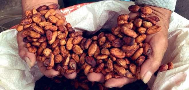 El acto contó con la presencia de productores de cacao de Esmeraldas y Manabí. Foto: Ministerio de Agricultura