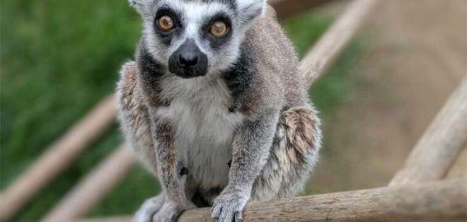 EEUU.- Aquinas Kasbar se declaró culpable de haber sustraído al animal. Foto: AFP
