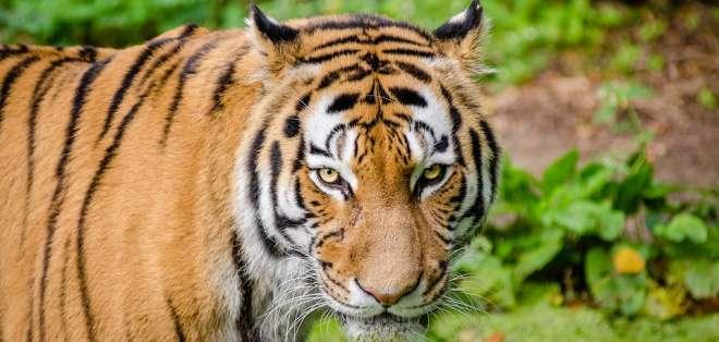 El animal huyó del carro, donde viajaba con su cuidador. Foto referencial / pixabay.com