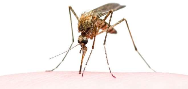 Los mosquitos contribuyen a más de 725.000 muertes al año.