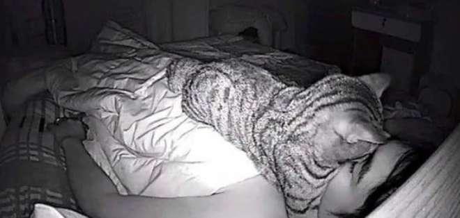 Descubrió que su gato lo asfixiaba por las noches. Foto: Facebook