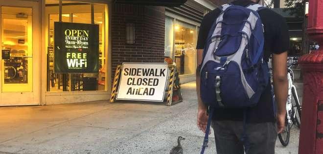 Los patitos fueron llevados a un albergue. Foto: AP