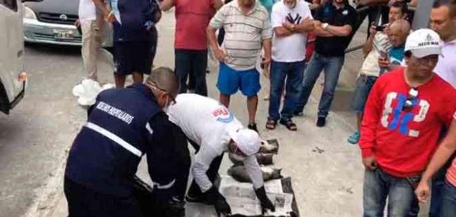 MANTA, Ecuador.- Según testigos del hecho, los animales agonizaron por varias horas en la acera. Foto: Cortesía La Marea
