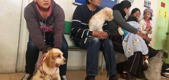 El cabildo explico que el objetivo es concienciar sobre el cuidado de las mascotas. Foto: DMQ