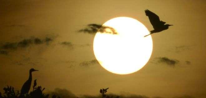 Los ciclos de luz y oscuridad y las fases lunares determinan la actividad de los animales.