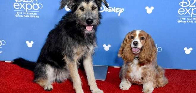 Los protagonistas de la película estuvieron en la alfombra roja la D23 Expo de Disney. Foto: AFP