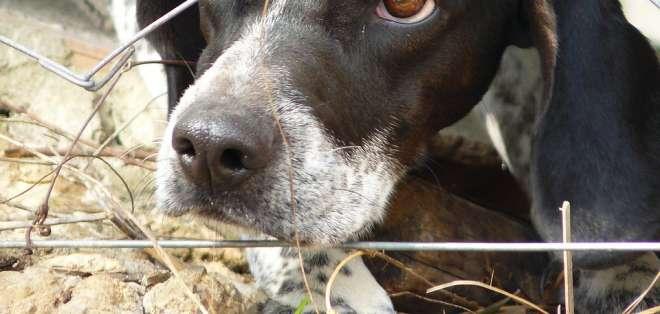 Las peleas de perros podrían ser sancionadas hasta con tres años de cárcel. Foto: Pixabay