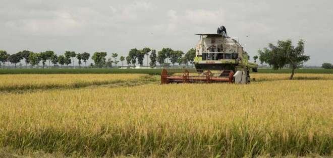 Las pérdidas por el paro nacional siguen subiendo en distintos sectores productivos. Foto: Ministerio de Agricultura y Ganadería