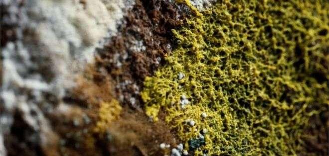 El physarum polycephalum es considerado uno de los misterios más grandes de la naturaleza. Foto: Reuters
